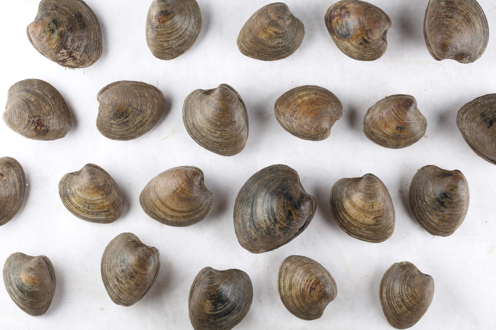 Seafoodpedia